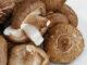 I vantaggi dei funghi Shitake