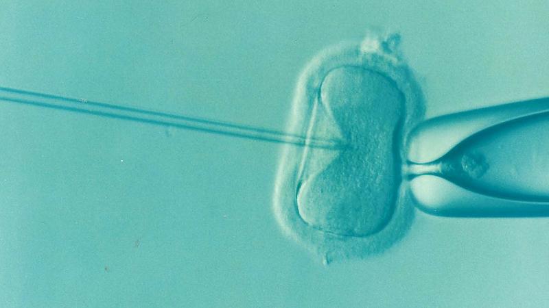 Influenzano la fertilità